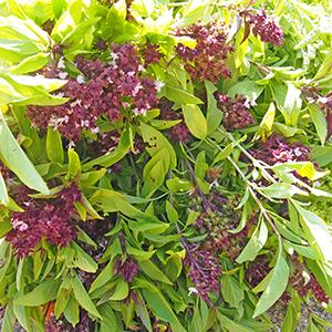 PLUS SOLEIL菜園/畑 1