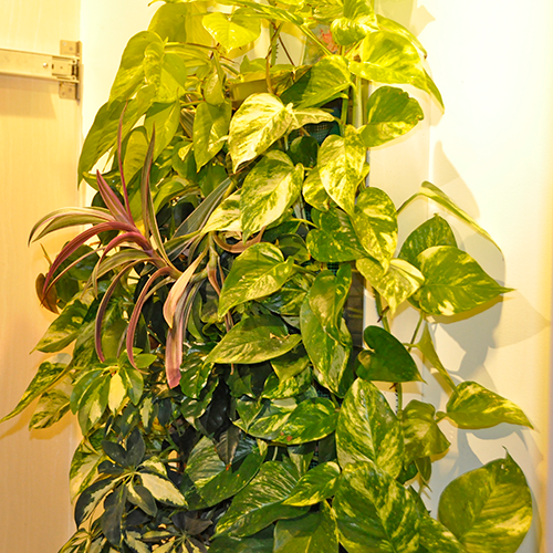 plantwallno7